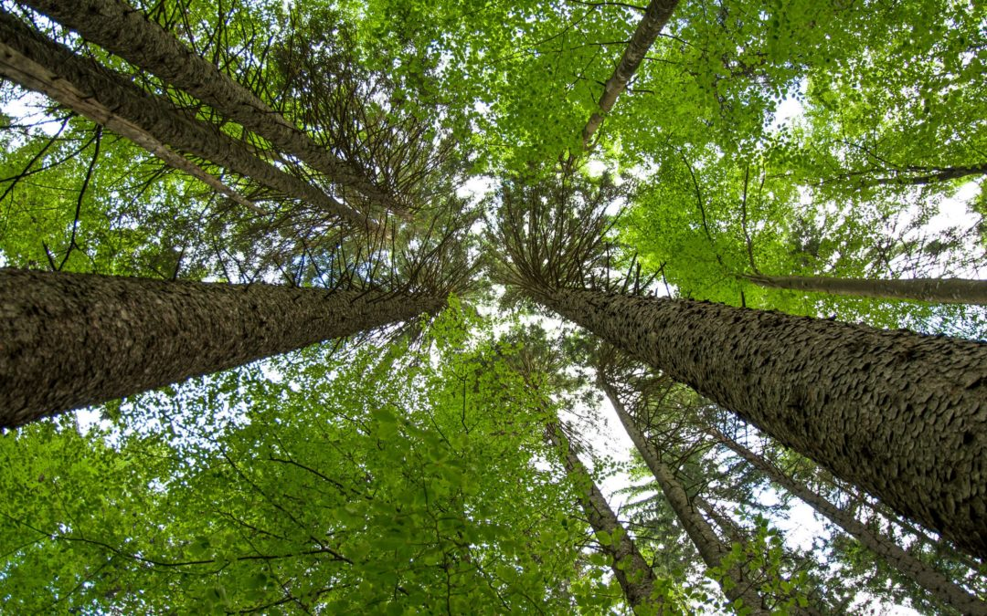 HP sets out ambitious sustainability targets